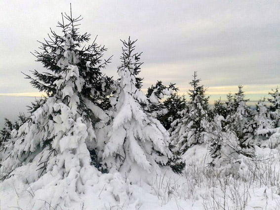 Regionale Skigebiete - Wild East Dresden